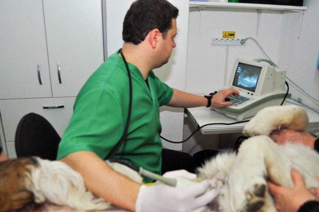 medicină veterinară pentru bolile articulare