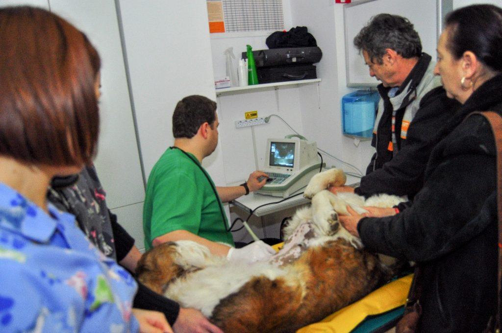boala articulară medicină veterinară